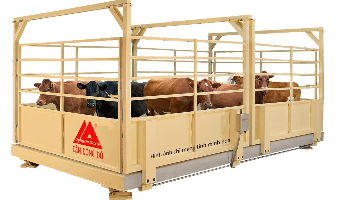 Cân động vật, gia súc từ 500kg, 1 tấn, 3 tấn đến 5 tấn